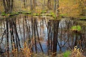 Vernal Pools: Wicked Big Puddles Or Critical Wildlife Habitat @ Fairlee Town Hall
